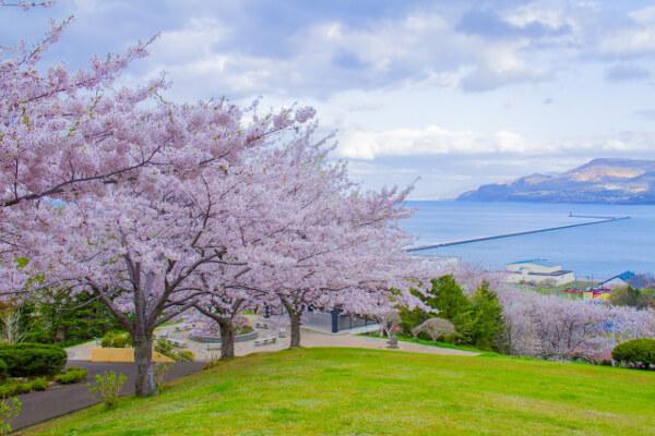 瀬戸内の海と桜