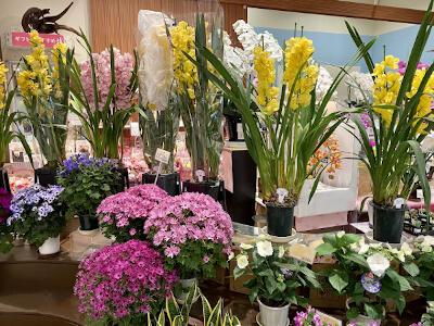 様々な花が並ぶお花屋さん